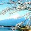 Nhật Bản sẽ nới lỏng quy định xin visa cho người Việt Nam
